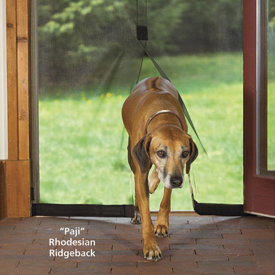 Dog Screen Door – SocialPaw